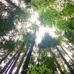 Lynn Canyon Ecology Centre Foto
