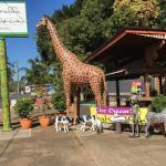The Big Giraffe