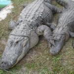 Sal & Nella our Gators