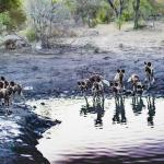 African Wild Dog's at watering hole just before sunset