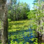 Grand Bay Wildlife Management Area