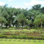 Sagay City Garden and Living Tree Museum
