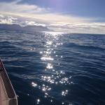 Koura Bay Fishing Charters Foto