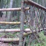 Заборчик из бамбука в бамбуковом лесу