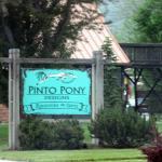Pinto Pony Designs