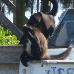 Monkeys playing on Island