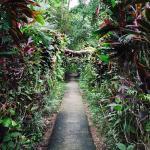 Photo of Hotel La Palapa Eco Lodge Resort