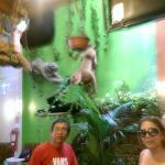 De la selva su Mijano