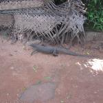Sigiriya Village Hotel Foto