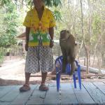 Samui Monkey Theatre Foto
