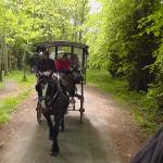 Jaunting car experience in Killarney.