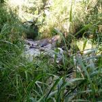 Trilha dentro da propriedade para a cachoeira