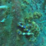 Atlantis Dive Resorts Dumaguete Foto