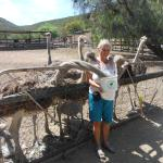 Cango Ostrich and Butterfly farm Foto