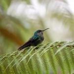 Prachtige vogel spotplek