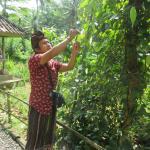 Photo de Ubud Sedana Homestay