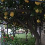 Entrouré de citrons!