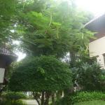 Photo of Holiday Village & Natural Garden Resort