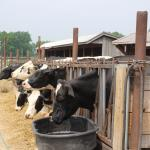 Cook Farm의 사진
