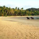 Playa Hermosa Wildlife