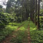 plantation view in nature walk