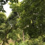 Dubare forest in nature walk