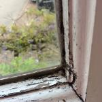 Mouldy window frames