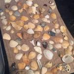 Cinnamon Beach at Ocean Hammock Beach Resort Picture