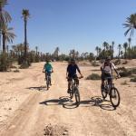 Off-road biking though a palm tree wonderland.