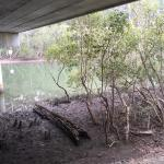 Coffs Creek Walk and Cycleway