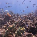 ABC House Reef