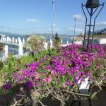 Floral View of the Harbor