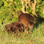 wildlife on your doorstep - Weka