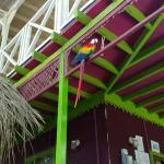 Photo de La Tropicale Beach Lodge
