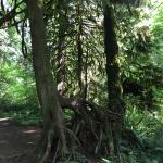 Tryon Creek State Park Foto