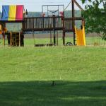 The play structure, with robin
