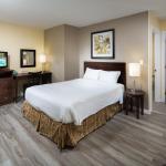Large 1 Bedroom Suite - 1 Queen + 1 Sofa Bed. Downstairs.