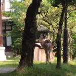 敷地内に鹿もきます