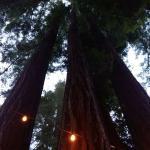 mooie plek tussen redwood bmen
