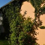 Blick Richtung Außensauna in der Gartensuite