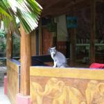 Foto de Casa Zen Guest House & Yoga Center