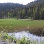 Kenai Lake area