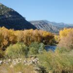Animas River in the fall