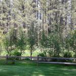 more lawn by the Metolius river