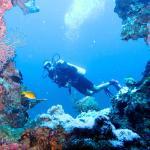 Photo de Bali Diving Academy Pemuteran