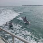 The dolphins having a whale of a time