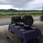Wine Country Bikes Foto
