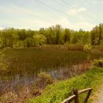 Vischer Ferry Nature and Historic Preserve