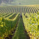 vineyards3