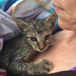 We rescued this kitten from the intracoastal, about 1/4 mile offshore.